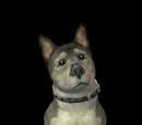 Mesa Flats pets