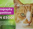 Miyanlove/News: Cat Photography Contest!