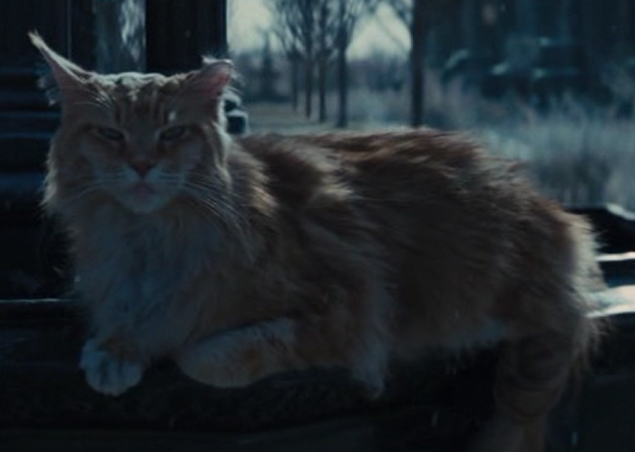 Prim From The Hunger Games Cat