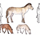 Dappleback horse