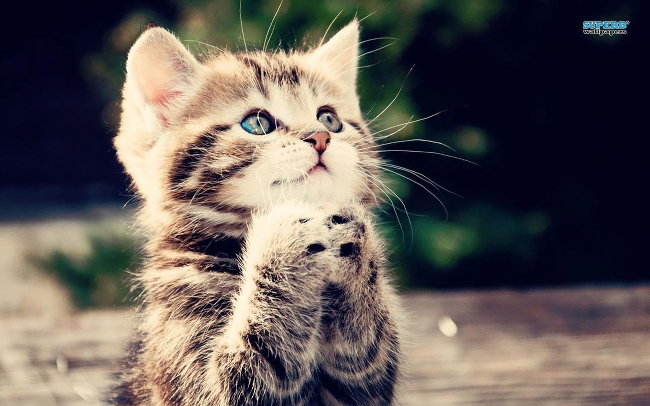 http://img1.wikia.nocookie.net/__cb20140519075925/thehungergames/images/8/84/Kitten-16219-1280x800.jpg