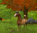 Monica's lost horse