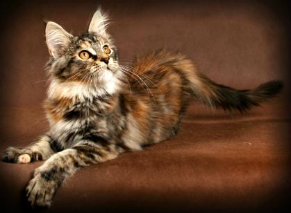 Hollowclan Warrior Cat Clans Wiki