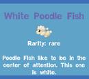 White Poodle Fish