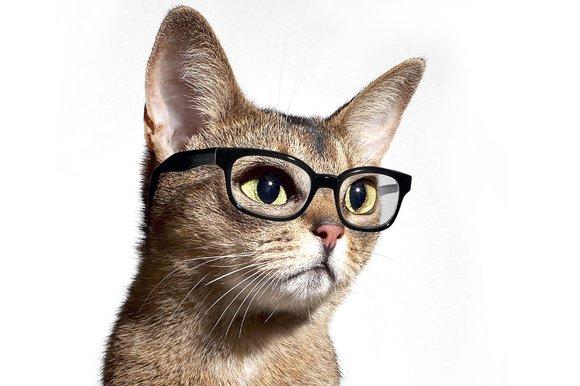 Картинки по запросу красивые фото котов