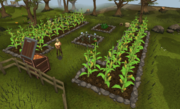 Harvesting a farming patch