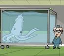 Mr Squids