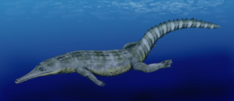 Guarinisuchus_munizi.jpg