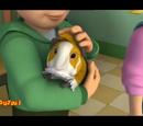 Norris the Guinea Pig