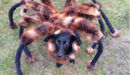 Il-transforme-son-chien-en-araignee-geante-COC.jpg
