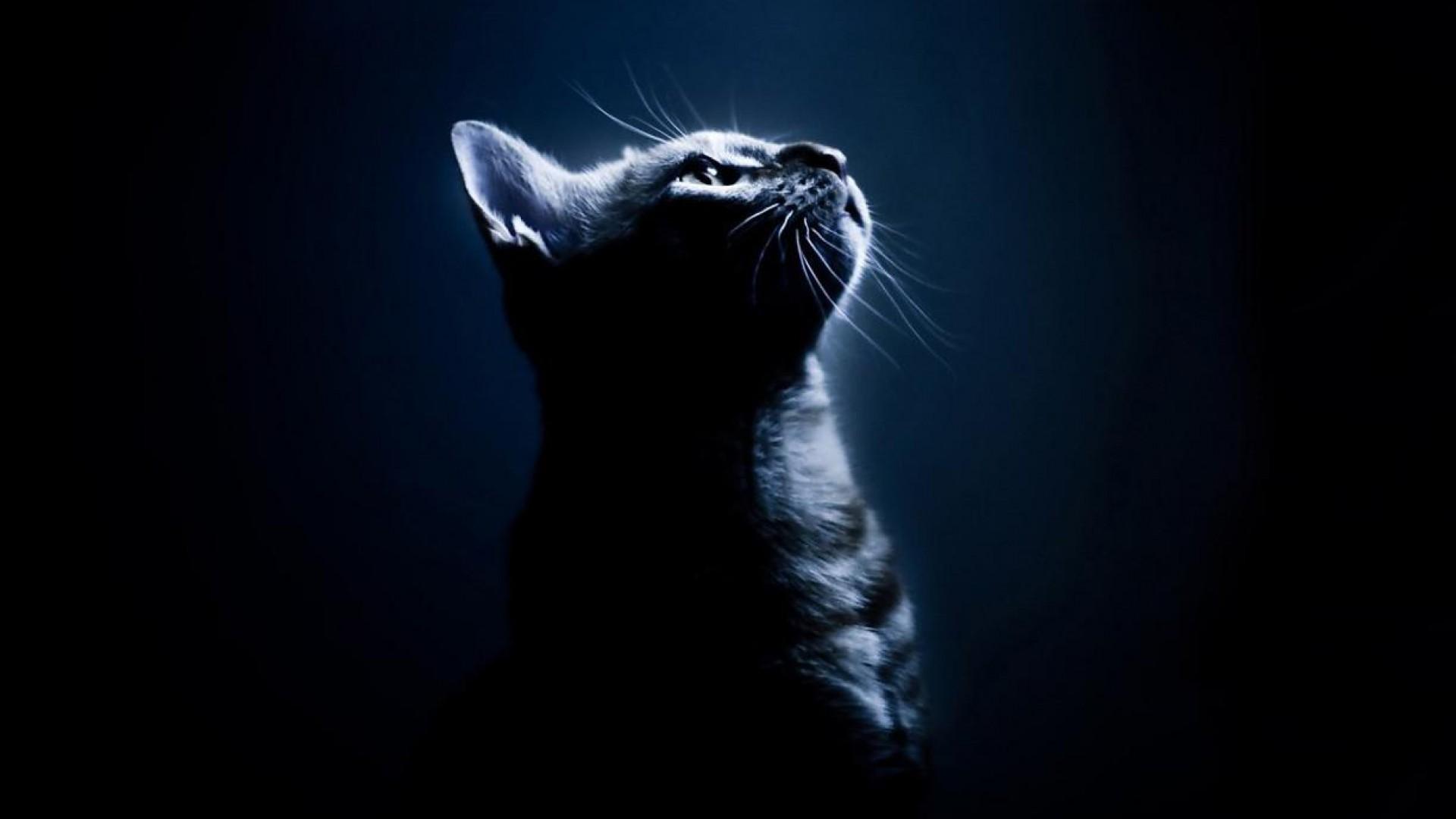 Black Cats Team Anonymous