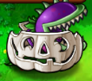 Plants on Pumpkin images