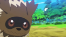 Youngster Zigzagoon Tackle.png