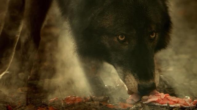 Hemlock Grove Werewolf FileHG wolf jpg