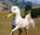 Horse-Duck