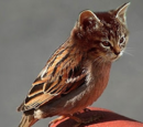 Kitty-Finch