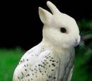 Bunny-Owl