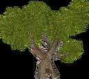 Hollow Tree (HENDRIX)