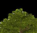Rainbush (slice)