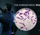 Harran Virus