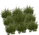 Boreal Grasses (JimmyzHoopz)