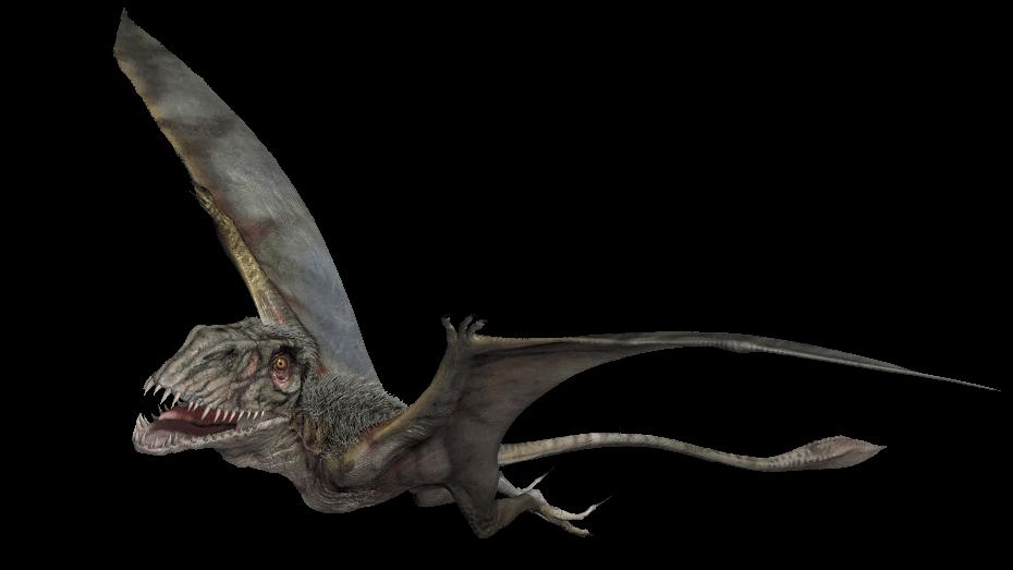 avec des crocs et le dinosaure apatosaurus sont dats du jurassique 200 145 millions dannes la plupart des autres animaux vivaient eux