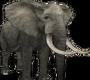 African Bush Elephant (Aurora Designs)