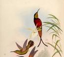 Subfamilies of Apodiformes
