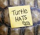Sombrero de tortuga/Galería