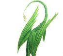 Zielnik liściasty