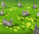 The Bunnies/Appearances