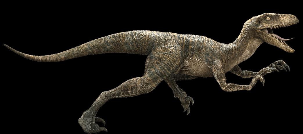EL Velociraptor - Todo lo que debes de saber Velociraptor-detail-header