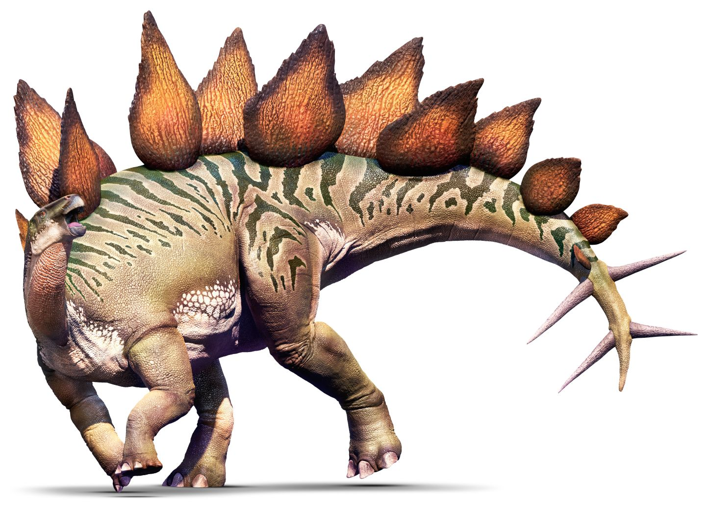 Stegosaurus Dinopedia The Free Dinosaur Encyclopedia