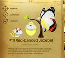 Red-banded Jezebel