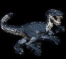 Novaraptor - skórka Arctic