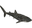 Whale Shark (Zerosvalmont)