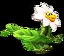 Dragón Pétalo