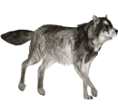 Gray Wolf (Ultamateterex2)