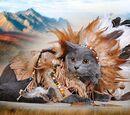 Коты-Индейцы Вики