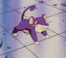 Nurse Joy's Rattata
