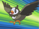 Ash Starly.png