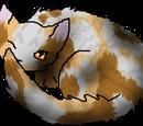 Pumpkinfrost