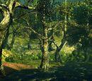 Лес Павших Гигантов