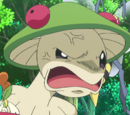 XY104: A Windswept Encounter!