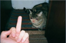 Fucked up sad cat.png