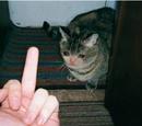 Fucked Up Sad Cats