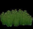 Shoal Grass (Fauna)
