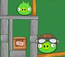 Свиньи-пилоты