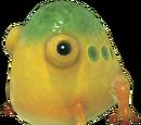 Sapo Gigante Amarillo