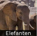 DE-Tiere-elephants.jpg
